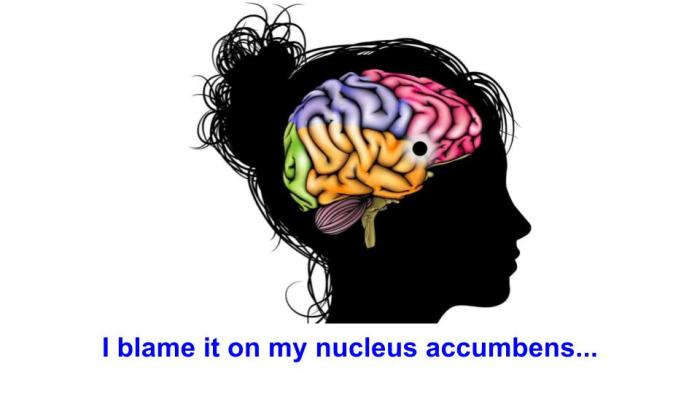 nucleus accumbens.jpeg